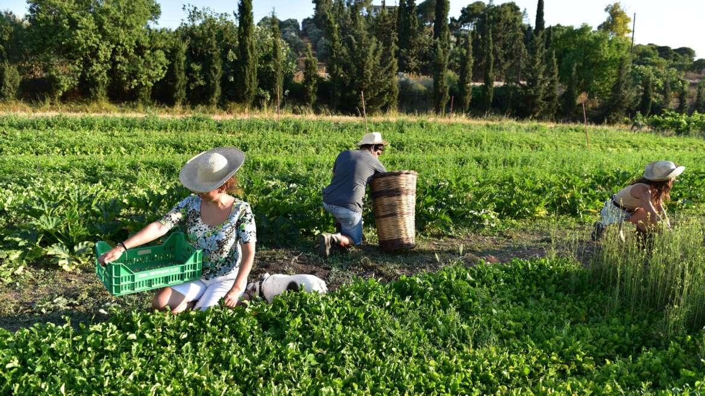 Πώς καταπολεμούνται τα ζιζάνια στις καλλιέργειες;