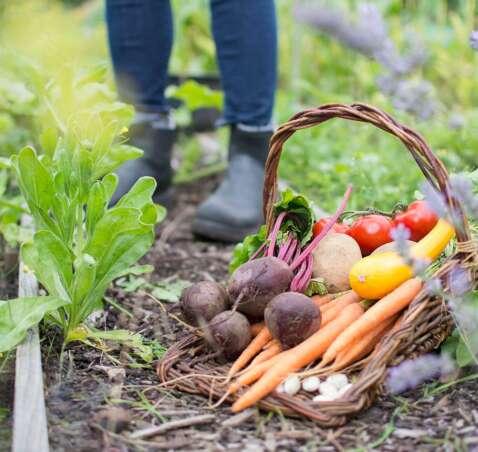 Φθινοπωρινές Συνταγές με Φθινοπωρινά Λαχανικά